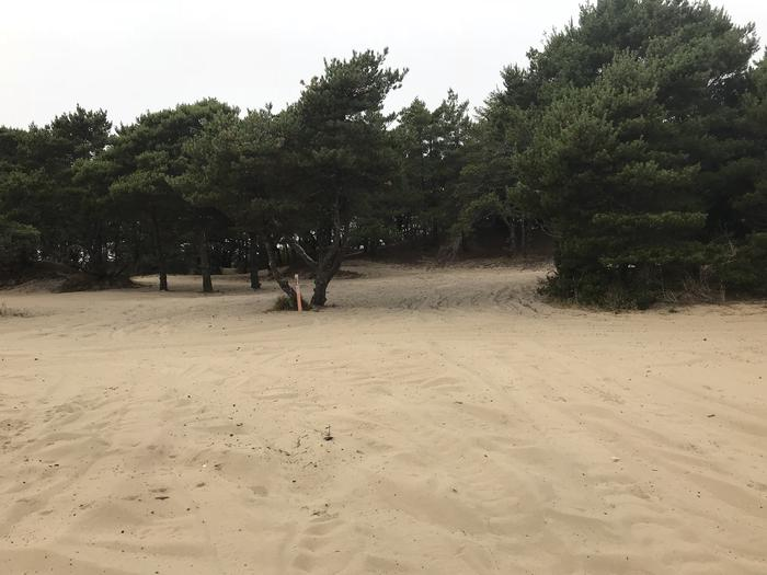 Umpqua Sand Camp Site #34
