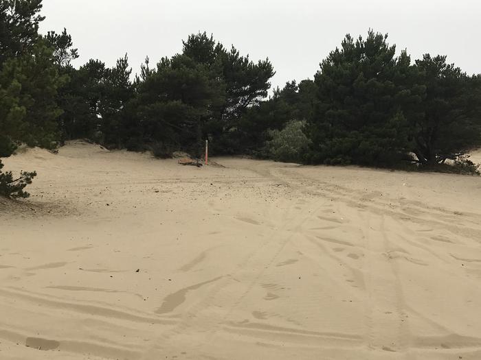 Umpqua Sand Camp Site #35