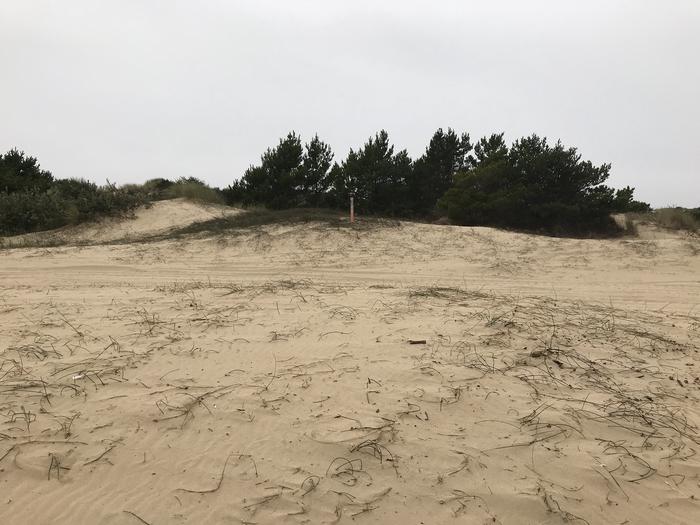 Umpqua Sand Camp Site #38