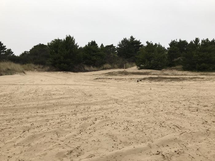 Umpqua Sand Camp Site #40