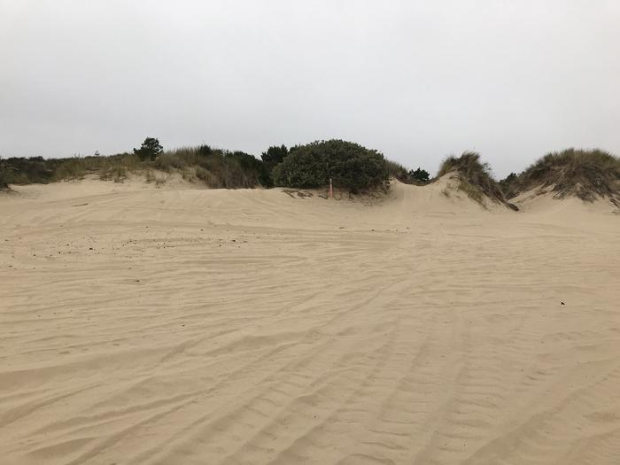 Umpqua Sand Camp Site #41