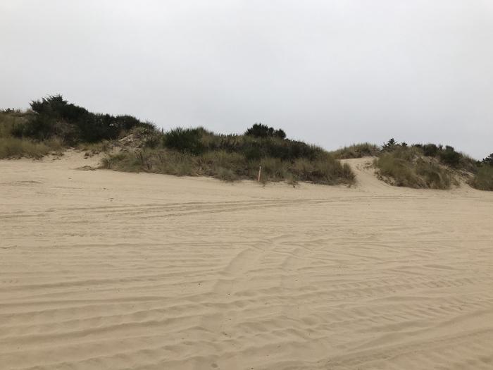 Umpqua Sand Camp Site #42