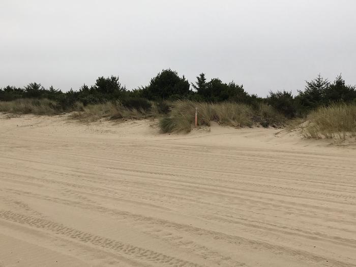 Umpqua Sand Camp Site #49