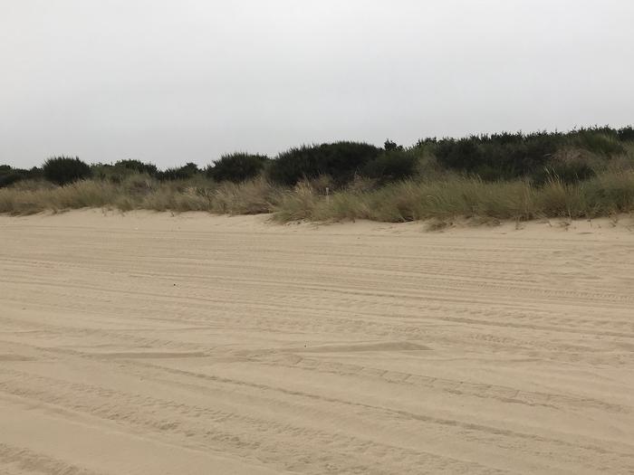 Umpqua Sand Camp Site #51
