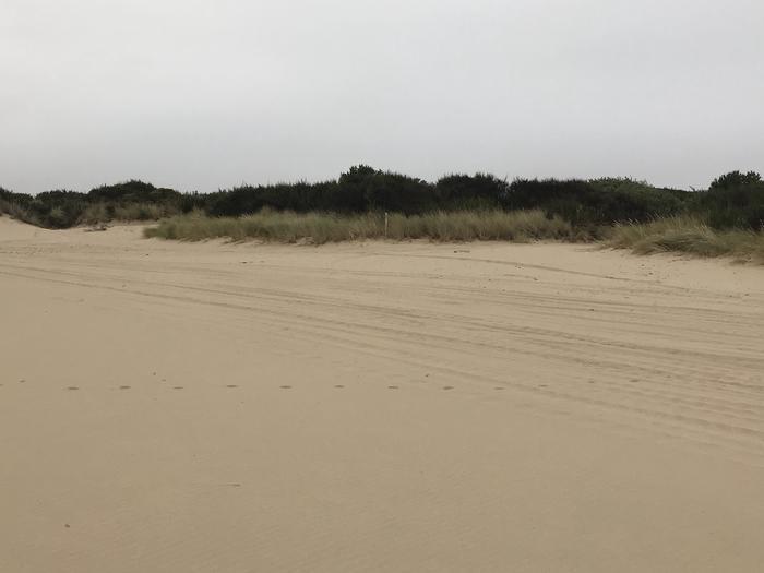 Umpqua Sand Camp Site #52