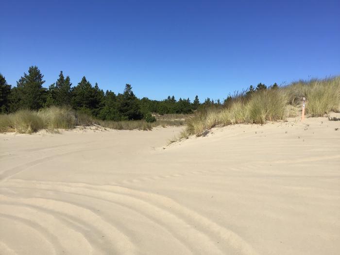 Hauser Sand Camp Site #75Hauser Sand Cam Site #75
