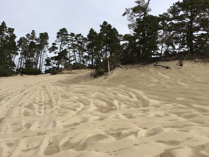 Hauser Sand Camp Site #79