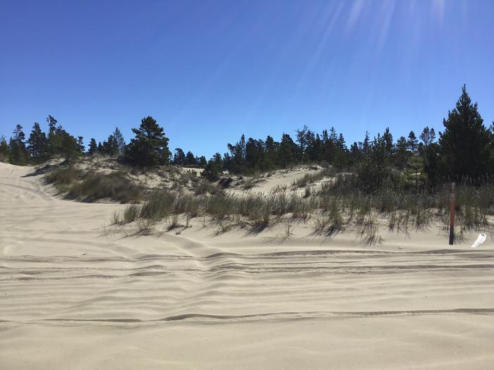 Hauser Sand Camp Site #81