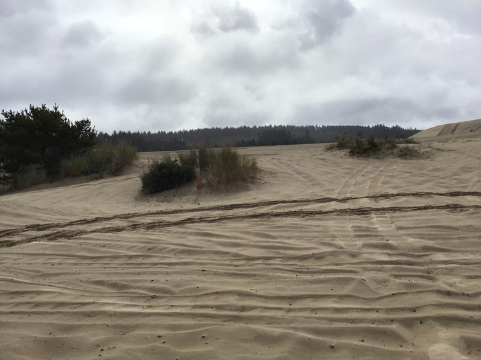 Hauser Sand Camp Site #91