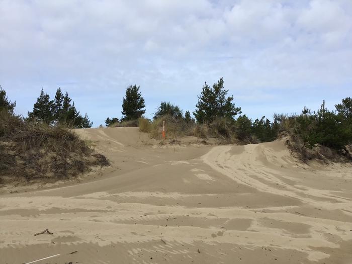 Horsfall Sand Camp Site #99