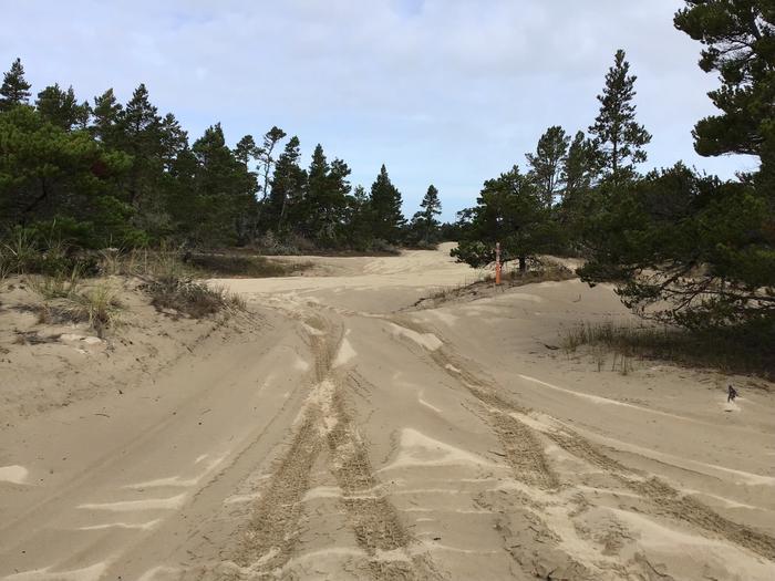 Horsfall Sand Camp Site #101