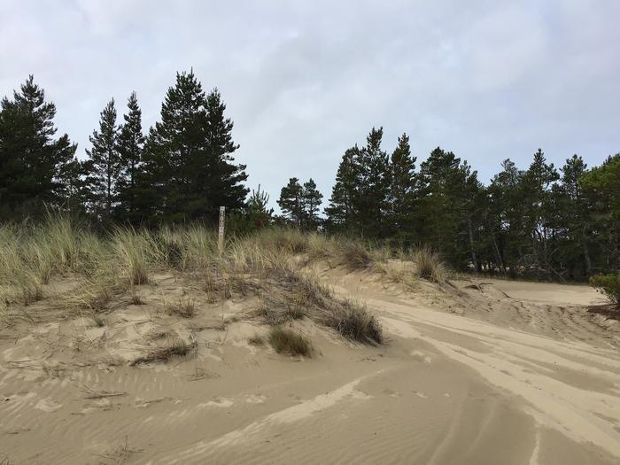 Horsfall Sand Camp Site #100