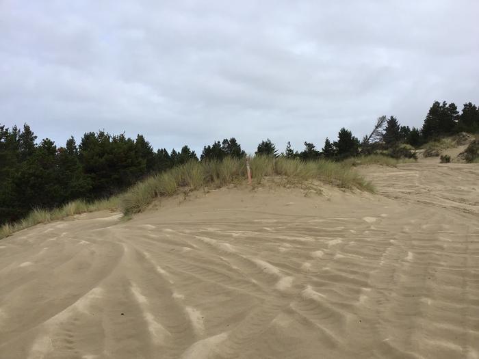 Horsfall Sand Camp Site #109