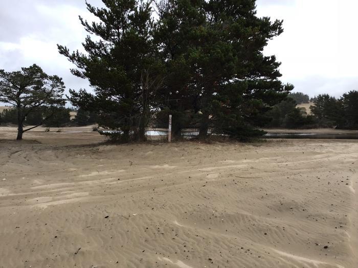 Horsfall Sand Camp Site #117