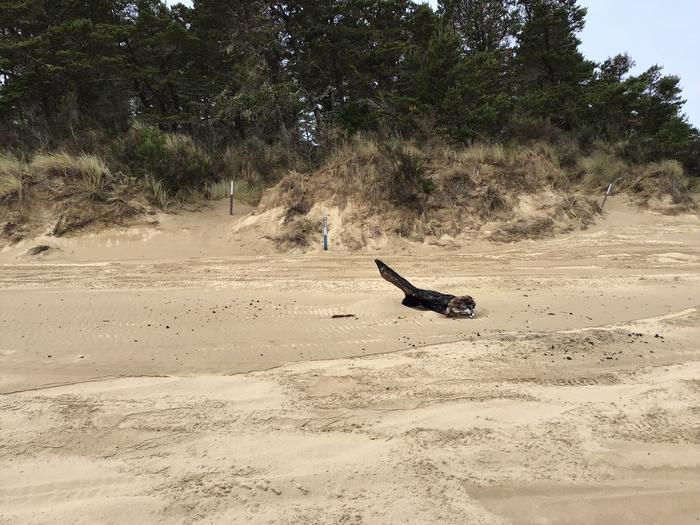 Horsfall Sand Camp Site #122