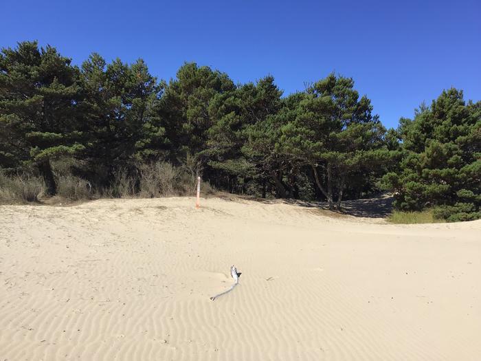 Horsfall Sand Camp Site #128