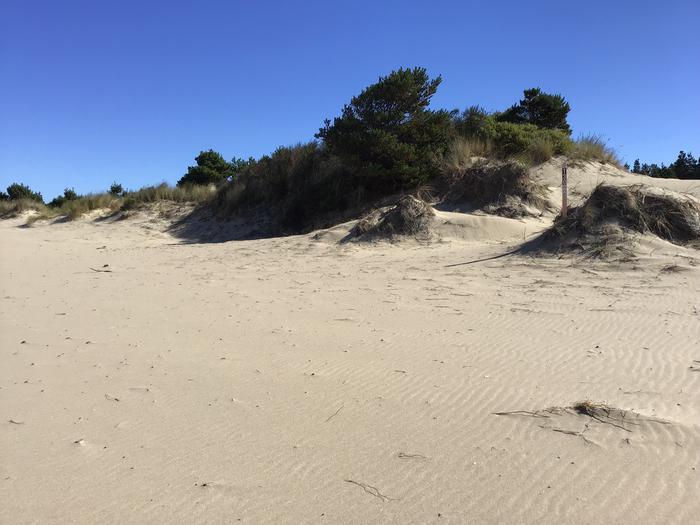 Horsfall Sand Camp Site #130