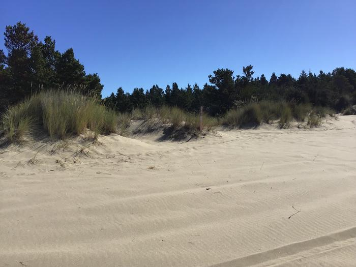 Horsfall Sand Camp Site #131