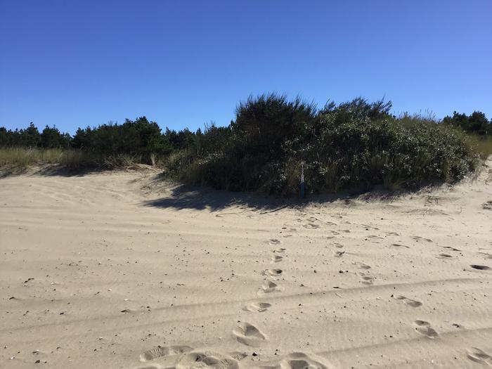 Horsfall Sand Camp Site #132