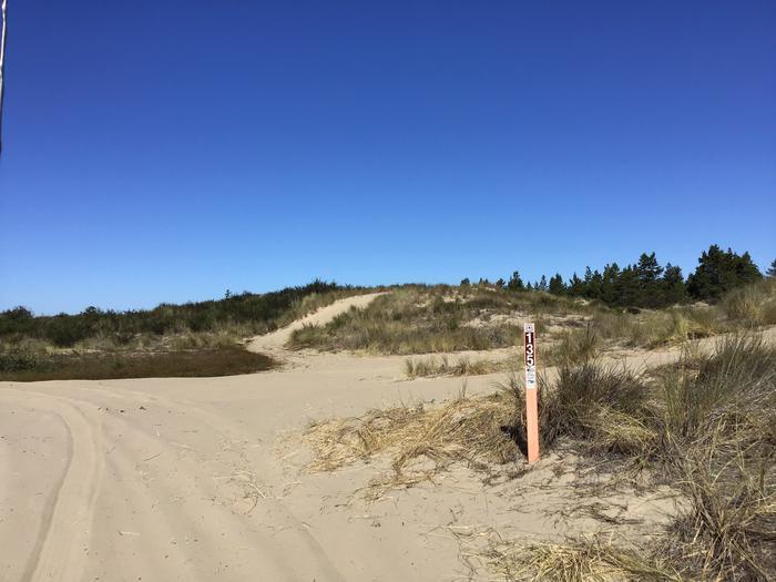 Horsfall Sand Camp Site #135