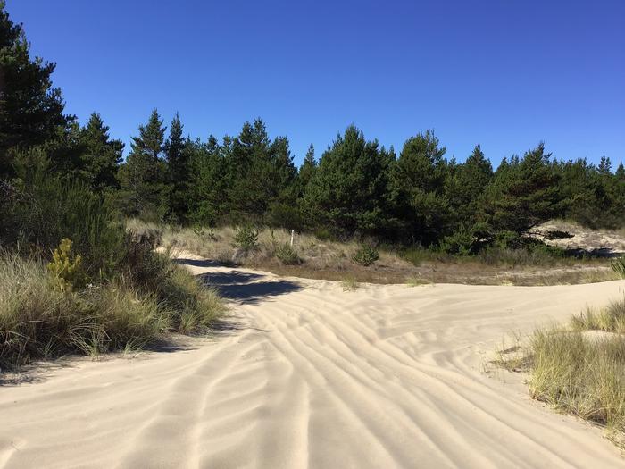 Horsfall Sand Camp Site #137
