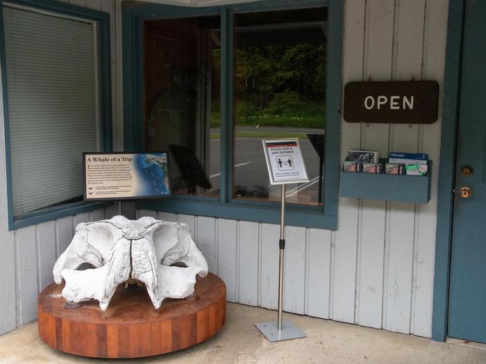 Kalaloch Ranger Station whale skullWhale skull displayed at Kalaloch Ranger Station.