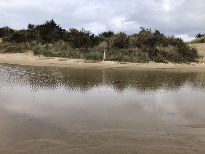 Umpqua Sand Camp Site #43