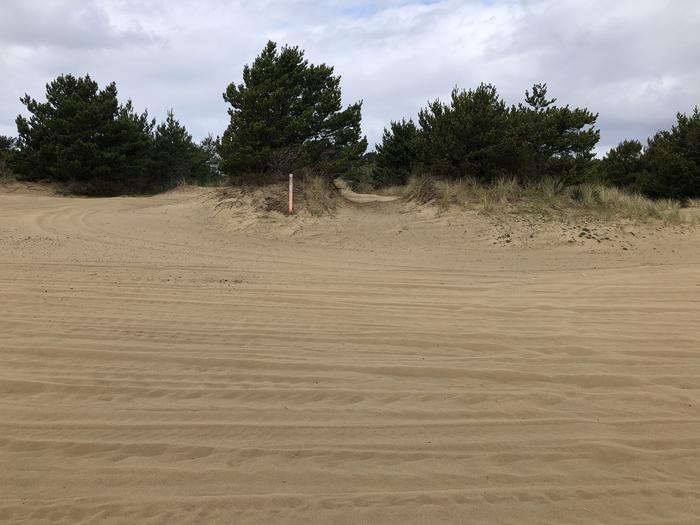 Umpqua Sand Camp Site #36
