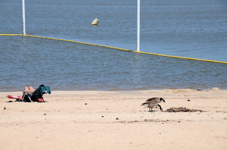 Galt's Ferry Day Use Swim Beach..Galt's Ferry Day Use Swim Beach