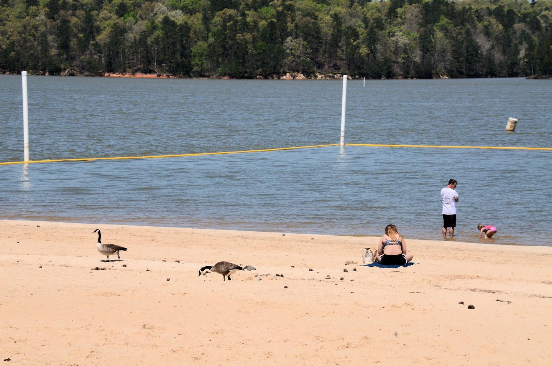 Galt's Ferry Day Use Swim Beach...Galt's Ferry Day Use Swim Beach
