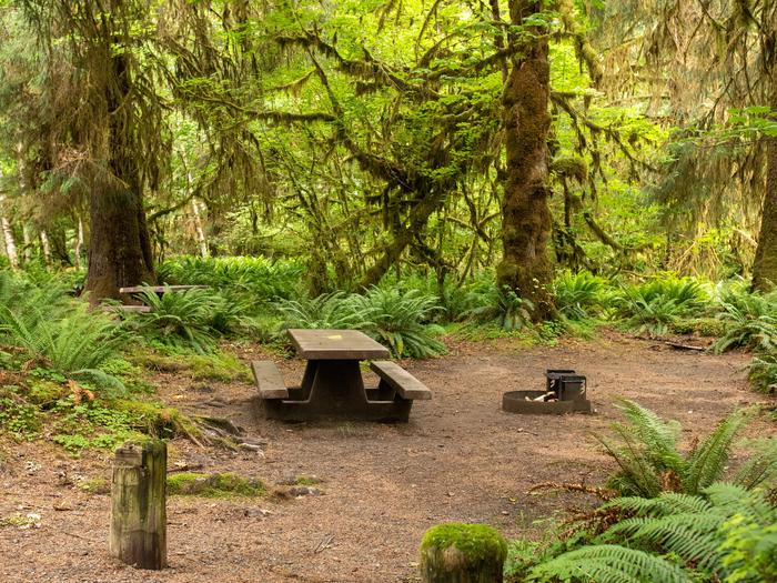 Hoh Campground A site in the Hoh Rain Forest Campground.
