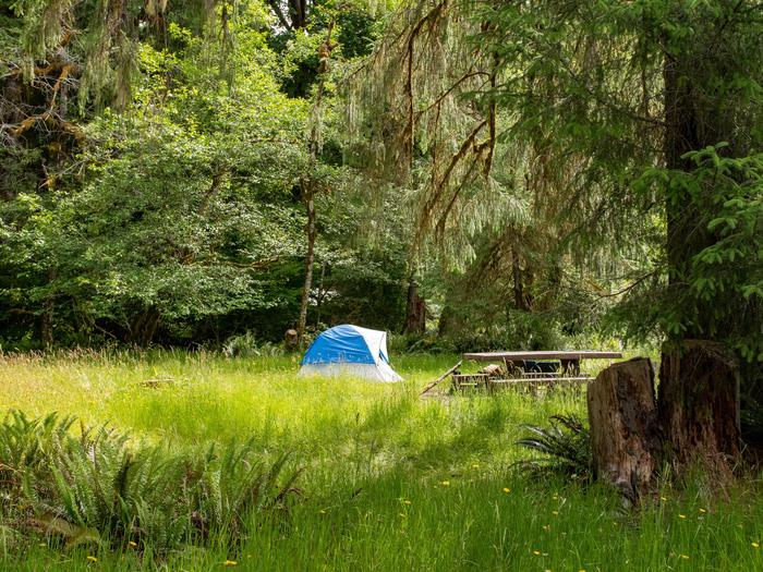 Hoh Campground 01A campsite in the Hoh Rain Forest Campground.