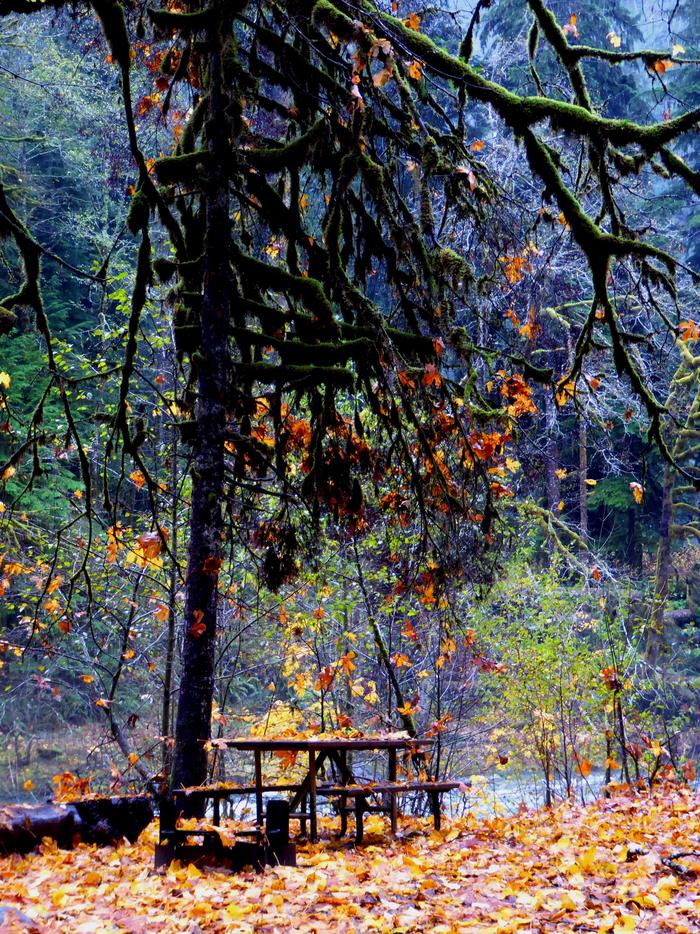 Staircase Campground 01A riverside campsite in the Staircase Campground in the fall.