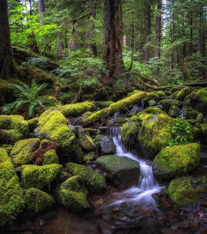 Sol Duc Tributary CreekA tributary creek in the Sol Duc River valley.