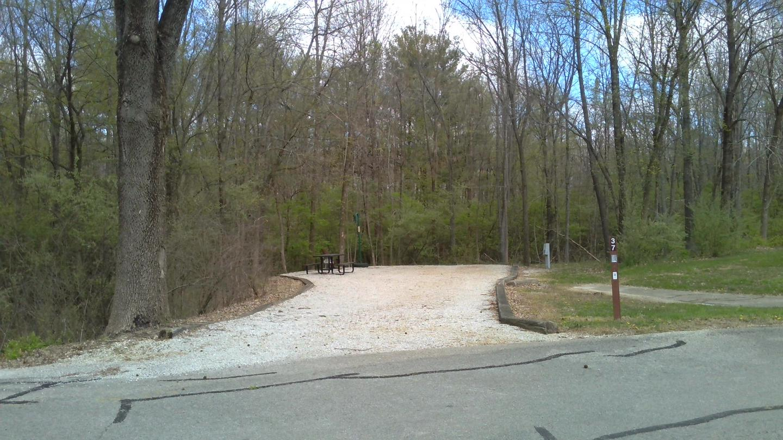 Site 37 Spring 2021