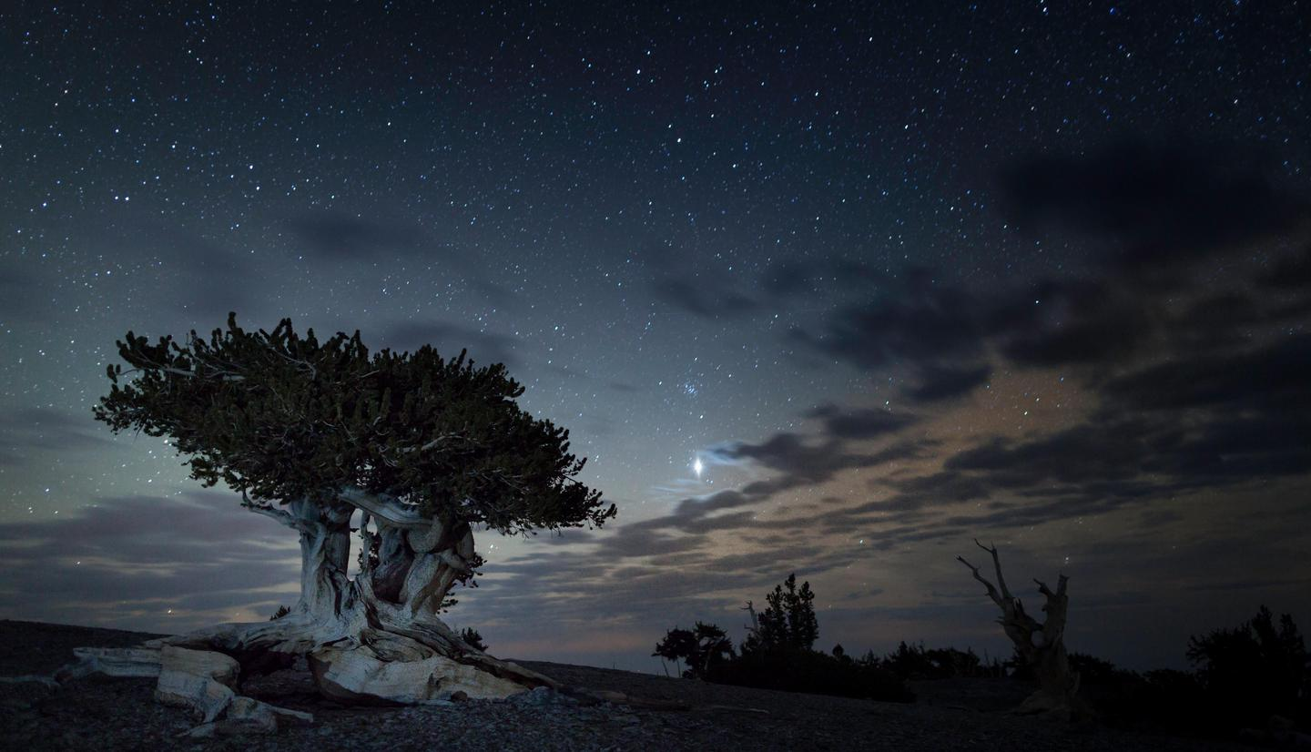 Bristlecone at nightPlants like Jupiter shine bright at Great Basin