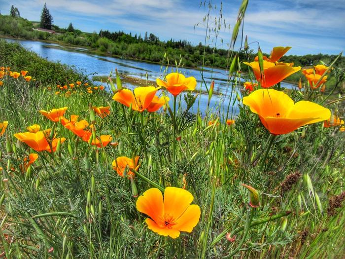Wildflower views from Horseshoe pondSee native wildflowers such as California Poppy during spring season throughout the park