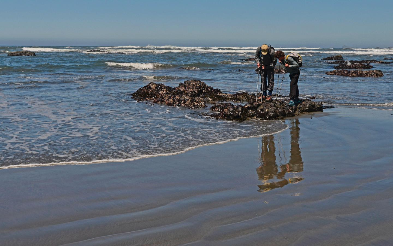 Tide pooling at Enderts BeachWe have forty miles of coastline to explore.