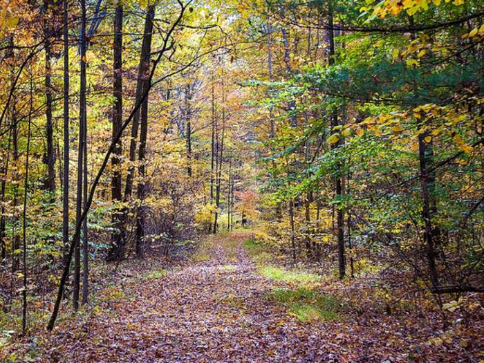 Preview photo of Hoosier National Forest