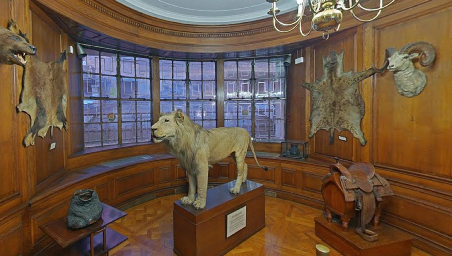 Lion's RoomTaxidermy pieces on display in the Lion's Room