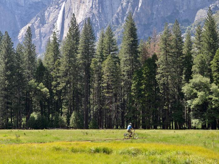 Bicyclist rides along established bike path in Yosemite Valley.