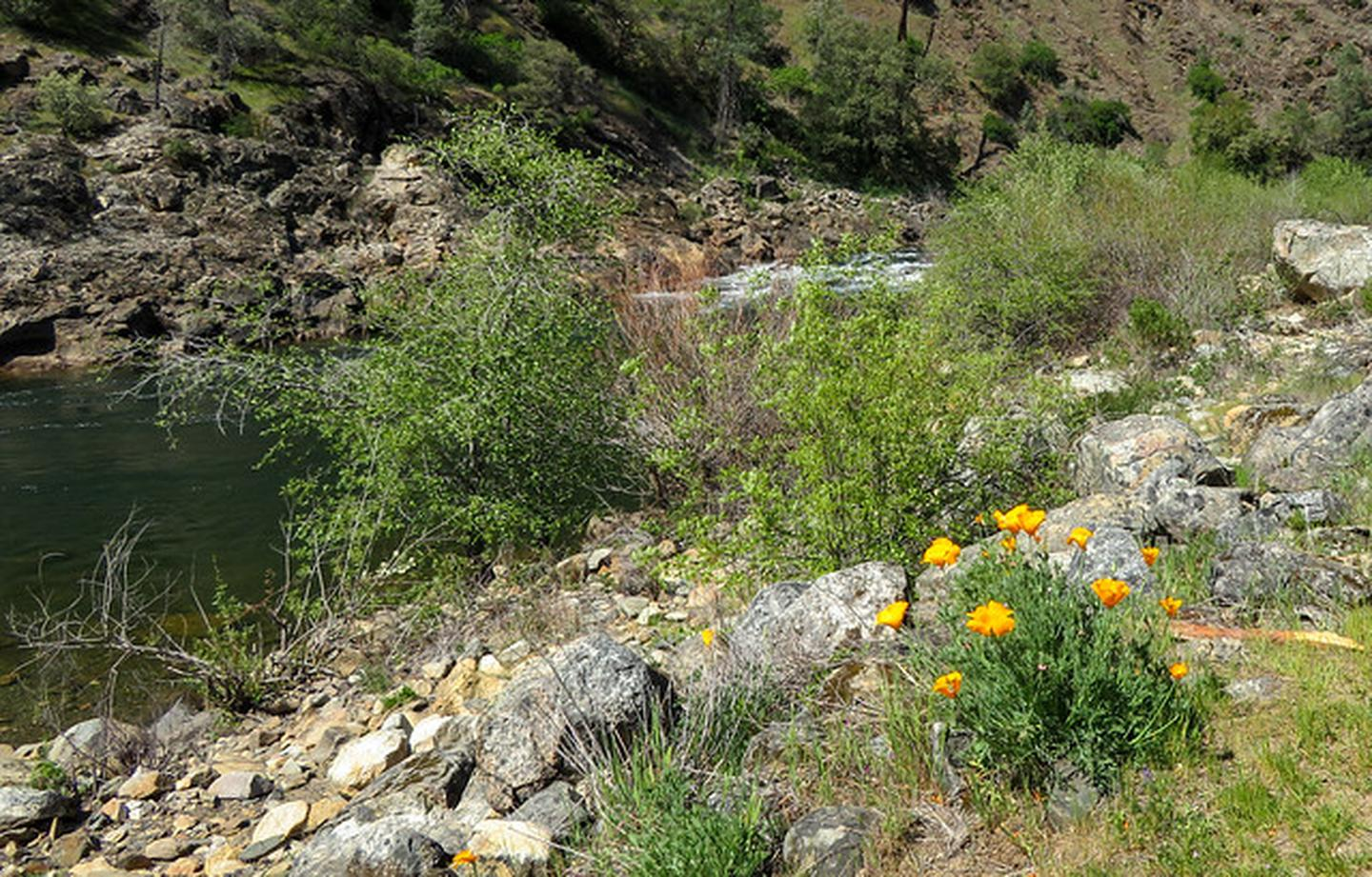 Old Flume TrailOld Flume Trail and poppies at South Fork American River