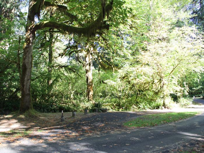 campsite with treesB45