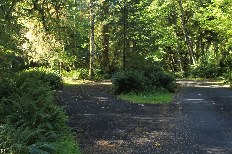 Campsite parking areaB52