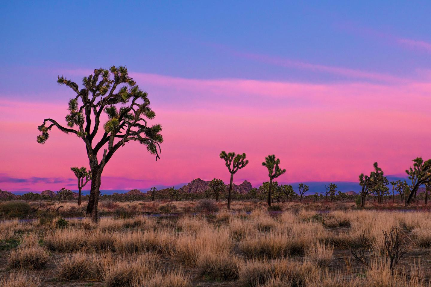 Preview photo of Joshua Tree National Park