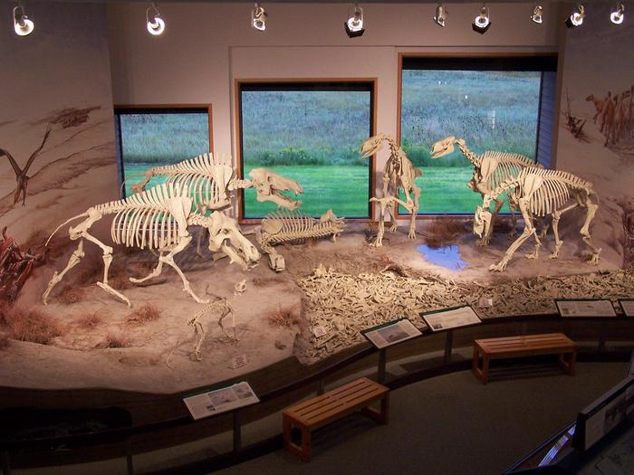Fossil Diorama DisplayOur full sized diorama of miocene era mammal fossils is a key attraction here at Agate Fossil Beds
