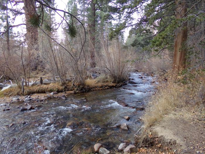 Fishing creek at Bishop Park