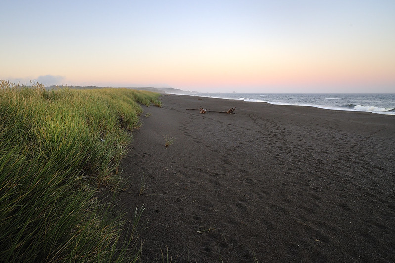 Fore dunes and beach grass at New River Area of Critical Environmental Concern.