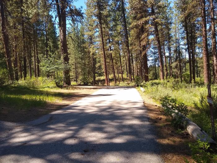A paved driveway leading to a double campsite in the woods.Site 1B, a double site at Grayback Gulch, has a long paved driveway.