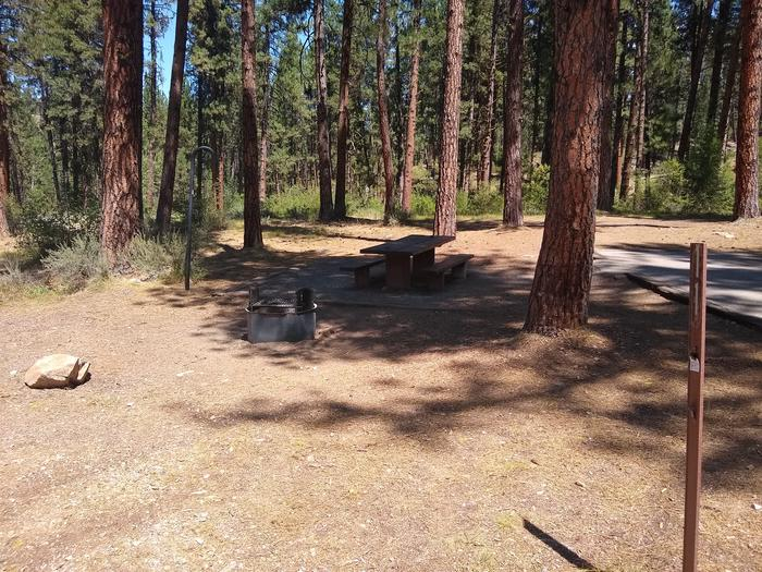 A pine-laden single campsite in the woods.A closeup of Site 9 at Grayback Gulch.